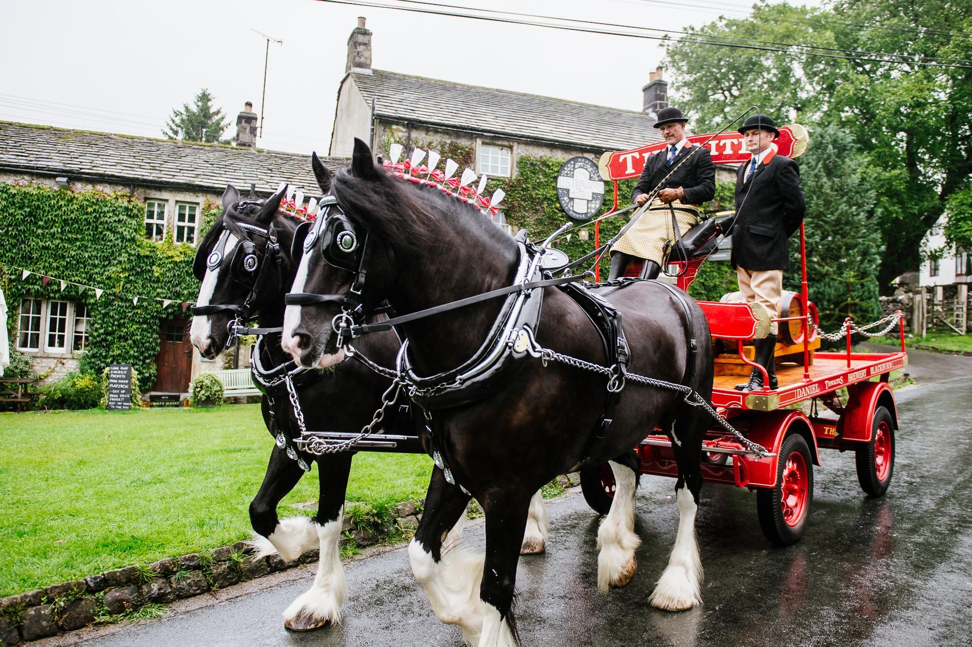 Thwaites Shire Horses